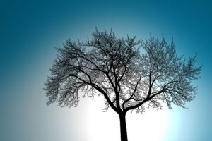 tree-silhouette-against-sky-1354823 (1)
